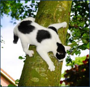 Indestructable Cat